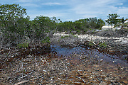 Mangrove destruction for housing<br /> Caye Caulker<br /> Ambergris Caye<br /> Belize<br /> Central America