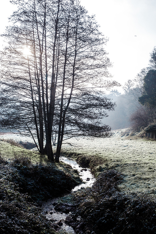 Sunlight shining through the trees over a stream in frosty St Peter's Valley on a calm winter day in Jersey, Channel Islands