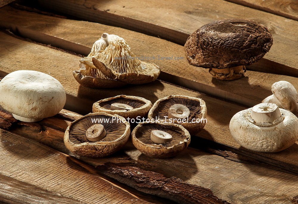 Different types of cultivated edible mushrooms on a wooden background