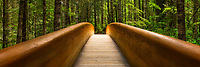A bridge leading into the forest in Lady Bird Johnson Grove of the Redwoods in Northern California.
