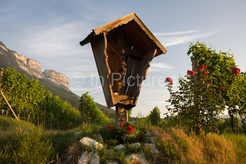 A Catholic crucifix and vineyard in the wine growing region south-west of Bolzano, South Tyrol, northern Italy. South Tyroleans are almost all Catholics and quite conservative - though it depends on the areas. In South Tyrol there are three indigenous wine varieties: Schiava, Gewürztraminer and Lagrein. The Überetsch (Oltradige in Italian) is a hilly section of the Etschtal in South Tyrol, northern Italy. It lies south-west of Bolzano and is a known tourist destination, famous for its wines, castles and lakes (Kalterer See, Montiggler Seen). Locals erect such shrines almost anywhere though especially in vineyards or meadows or in villages where an agricultural holy omen is welcomed for good harvests.