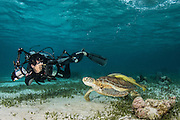 Green Sea Turtle (Chelonia mydas) & Luciano Candisani<br /> Shark Ray Alley<br /> Hol Chan Marine Reserve<br /> near Ambergris Caye and Caye Caulker<br /> Belize<br /> Central America
