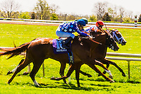 Horse racing on the turf course at Keeneland Racecourse, Lexington, Kentucky USA.