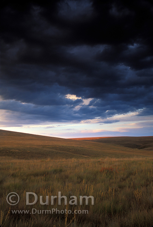 The Nature Conservancy's Zumwalt Prairie Preserve, one of the largest remaining intact bunchgrass prairies in North America. Storm clouds are about to drench the parched grassland. © Michael Durham / www.Durmphoto.com
