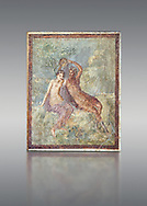 Roman Nero Period fresco wall painting of Perseus and Andromeda, from a house in the Insula Occidentalis at Pompeii , inv 9058 , Naples National Archaeological Museum , grey background .<br /> <br /> If you prefer to buy from our ALAMY PHOTO LIBRARY  Collection visit : https://www.alamy.com/portfolio/paul-williams-funkystock - Scroll down and type - Roman Fresco Naples  - into LOWER search box. {TIP - Refine search by adding a background colour as well}.<br /> <br /> Visit our ROMAN ART & HISTORIC SITES PHOTO COLLECTIONS for more photos to download or buy as wall art prints https://funkystock.photoshelter.com/gallery-collection/The-Romans-Art-Artefacts-Antiquities-Historic-Sites-Pictures-Images/C0000r2uLJJo9_s0