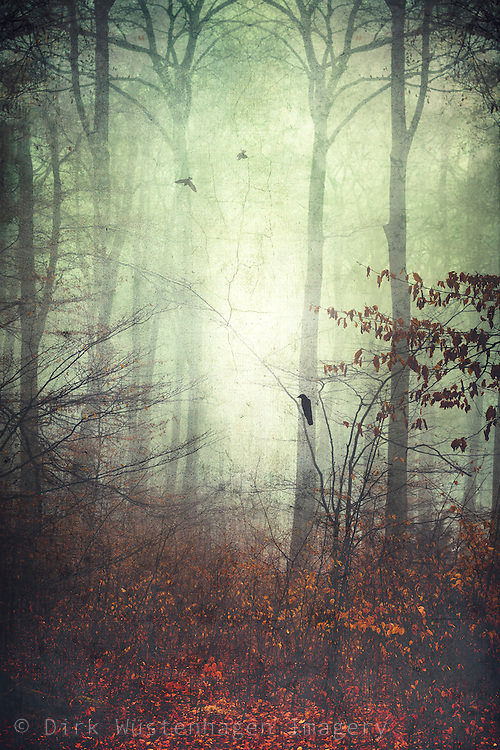 Misty and moody forest scene in late fall with a bird - textured photograph<br /> <br /> Redbubble products: http://www.redbubble.com/people/dyrkwyst/works/18576832-seasons?ref=recent-owner<br /> Society 6 products:<br /> http://society6.com/product/seasons-0tu_print#1=45