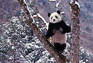 China Wildlife