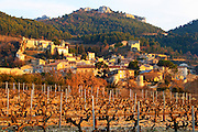 A vineyard with syrah vines at sunset and the village Gigondas, Vaucluse, Rhone, Provence, France