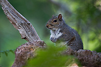 squirrel in the new forrest  photo By Michael Palmer