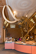 Museum of Natural History and Science