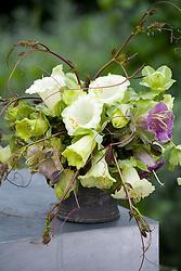Simple cobaea arrangement in pewter jug