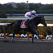 Ron the Greek ridden by Jose Lezcano during his runaway victory in the Jockey Club Gold Cup at Belmont Park during the Jockey Club Gold Cup Day, Belmont Park, New York. USA. 28th September 2013. Photo Tim Clayton