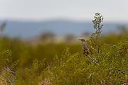 Wildlife Bird photography from Little Black Mountain Petroglyph Site Utah, USA