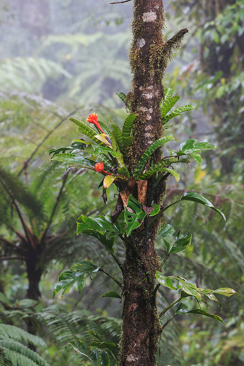 Tree and vegetation in mist of premontane cloud forest, Nectandra Cloud Forest Garden, Costa Rica.