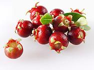 Organic Ugni molinae or Turcz fruit