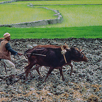 Villagers plow and plant rice in flooded paddies in the Kathmandu Valley, Nepal., 1977.
