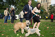 London, UK. Thursday 10th October 2013. Eric Joyce MP and his Irish Wheaten Terrier, Brodie, gets into a fight with another dog. MPs and their dogs competing in the Westminster Dog of the Year competition celebrates the unique bond between man and dog - and aims to promote responsible dog ownership.