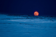 The moonrise in springtime