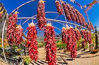 Ristras (drying red chile pepper pods), Jericho Nursery, Albuquerque, New Mexico USA