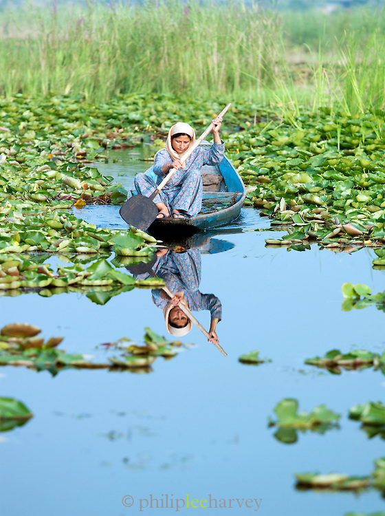 A woman paddling her shikara, a local wooden boat, through lilly pads on Lake Dal, Kashmir, India