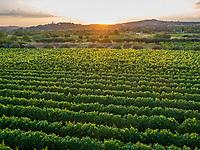 Aerial view of vineyards in Nerezisca dalmatian village at sunset, Brac Island, Croatia.