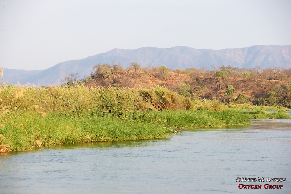 Island View On The Zambezi