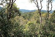 Landscape of Rainforest, Tree top canopy, Ranomafana National Park, Madagascar, Montane Forest