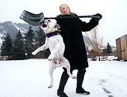 """NEWS&GUIDE PHOTO / PRICE CHAMBERS<br /> Sonda Strozza does her best to keep a snow shovel away from her English Bulldog Yogi on Monday. The dog likes to chew on and be dragged by the shovel. """"We're gearing up for sledding,"""" Strozza said. The dog also likes to ride skateboards."""
