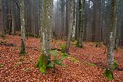 Bavarian forest in autumn.