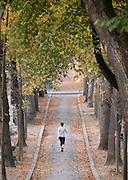 Tree lined path in Cimetier du Pere Lachaise, Paris, France