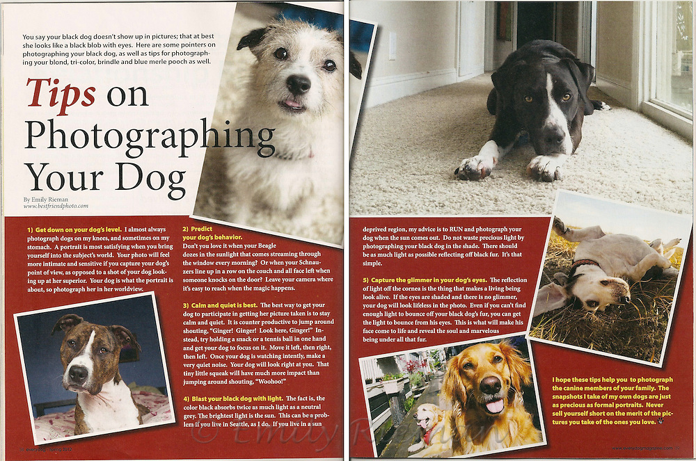 Tips on Photographing Your Dog by Emily Rieman, EveryDog Magazine, Spring 2012