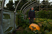 George Rodgers, 63, a Cornish farmer of at least three generations grows giant vegetables on a quarter acre plot. The seed for his cabbages comes from his father and he provides the seed he says for 85 percent of the cabbages at the main Bath and West Show, which he is preparing for now. Giant vegetable growing is not a hobby for the faint hearted. The growers have to tend to the vegetables almost every day (including Christmas) with a commitment varying from  2-3 hours an evening to the most committed spending up to 80 hours a week, tending, nurturing, growing and spending thousands on fertilisers, electricity and green houses.  The reward is to be crowned world record holder of largest, longest or heaviest in class, cabbages weighing in at 100lb, carrots stretching 19 ft and pumpkins tipping the scales at 800lb. it's a competitive business though and global; some times the record may stand for only hours before a fellow competitor somewhere in the world knocks a grower off the coveted spot.