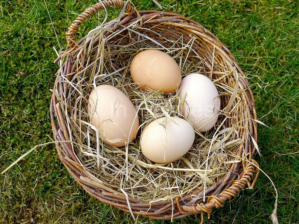 A basket of Deborah Devonshire's hens eggs in a basket in the garden at her home on Chatsworth Estate.