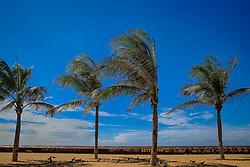 Coqueiros na Praia de Iracema, em Fortaleza - CE. FOTO: Jefferson Bernardes/ Agência Preview