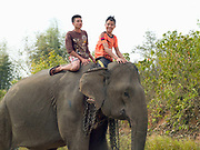 Two young Lao boys riding on the back of a female Asian elephant carrying chains at Sayaboury elephant festival, Sayaboury province, Lao PDR. Originally created by ElefantAsia in 2007, the 3-day elephant festival takes place in February in the province of Sayaboury with over 80,000 local and international people coming together to experience the grand procession of decorated elephants. It is now organised by the provincial government of Sayaboury.The Elephant Festival is designed to draw the public's attention to the condition of the endangered elephant, whilst acknowledging and celebrating the ancestral tradition of elephant domestication and the way of life chosen by the mahout. Laos was once known as the land of a million elephants but now there are fewer than 900 living in the country. Around 470 of them are in captivity, traditionally employed by a lucrative logging industry. Elephants are trained and worked by a mahout (handler) whose relationship to the animal is often described as a marriage and can last a lifetime. But captive elephants are often overworked and exhausted and as a consequence no longer breed. With only two elephants born for every ten that die, the Asian elephant, the sacred national emblem of Laos, is under serious threat of extinction.