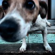 Mia. #milovice #czechrepublic #dog #portrait #lysanalabem #animal #czechrepublic #prag #praha #prague #mia