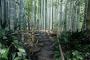 entrance to the bamboo forest garden at Hokokuji Temple Kamakura Japan