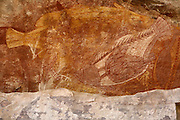 Groups of Aboriginal people camped in rock shelters around Ubirr to take advantage of the enormous variety of foods available from the East Alligator River, the Nadab floodplain, the woodlands, and the surrounding stone country. The rock overhang of the main gallery provided an area where a family could set up camp. Food items were regularly painted on the back wall, one on top of the other, to pay respect to the particular animal, to ensure future hunting success, or to illustrate a noteworthy catch. Among the animals painted in the main gallery are barramundi, catfish, mullet, goannas, long-necked turtles, pig-nosed turtles, rock ringtail possums, and wallabies. Although Aboriginal people no longer live in the shelter, the animals depicted are still hunted for food today.