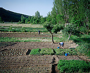 Community fields in Rio Onor Village. These fields are prpriety of all the people of the village and they are divided and assignement to each family of the community. The size of the field that each family get is proportional to the members of each family.
