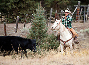 PRICE CHAMBERS / NEWS&GUIDE<br /> Cody Lockhart cuts a steer away from a group of bulls at the Lockhart Cattle Company on Friday.