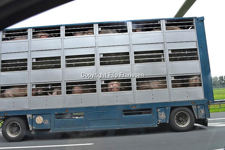 Nederland, A73, Boxmeer, 25-7-2017 Veewagens met varkens op weg naar het slachthuis. The Netherlands. Pigs in a lorry, truck, on their way to the slaughterhouse.Foto: Flip Franssen