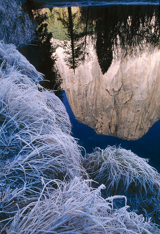 Morning reflection of El Capitan on the Merced River, winter, Yosemite National Park, California, USA