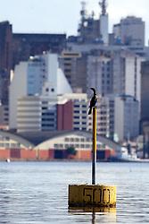 O pássaro Biguá é um dos que mais habita as margens do Rio Guaíba , em Porto Alegre. FOTO: Jefferson Bernardes/Preview.com