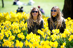© London News Pictures. 21/04/2013. London, UK. Two young ladies enjoy the weather while sat in the daffodils at Regents Park, London. Photo credit : Ben Cawthra/LNP