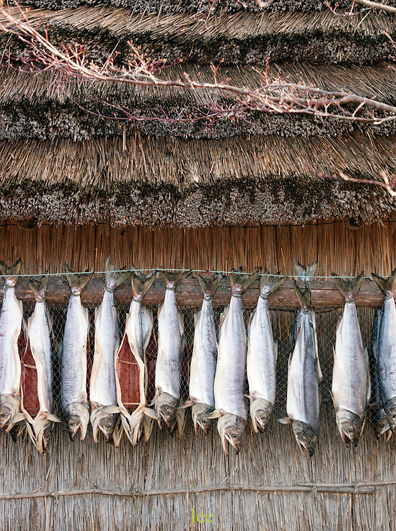 Gutted fish are left to dry outside the Ainu Museum on Lake Poroto, Hokkaid?, Japan