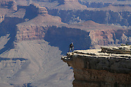 Man atop cliff peers over overhanging rock precipice into dizzying depths of Grand Canyon at Mather Point on South Rim of Grand Canyon National Park, Arizona.