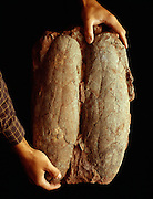Macroelongatoolithus xixiaensis from China are the world's largest know dinosaur eggs.  From the Xixia Basin.