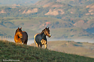 Wild Horses at Theodore Roosevelt National Park in North Dakota