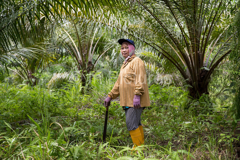 Fatimah Binti Jalal - a smallholder palm oil farmer - stands on her plot in Toniting, Beluran District, Sabah, Malaysia, on 8 September 2016. Fatimah has been farming her small plot since 2005, but the soil is sandy and not very productive. She has been able to increase her yields since becoming part of the Wild Asia Group scheme, which works with the Roundtable on Sustainable Palm Oil to support Malaysian smallholders to become certified sustainable. This includes improving farm management, reducing their use of pesticides and fertilizers, and increasing yields. Smallholders account for 40% of global palm oil production, and as such play an important role in increasing sustainability within the industry.