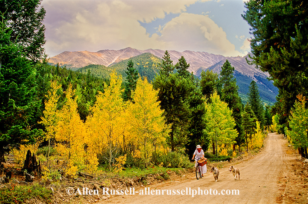 Woman riding bicycle to picnic, Australian Shepherd dogs, San Isabel National Forest, Colorado, <br /> MODEL RELEASED, PROPERTY RELEASED